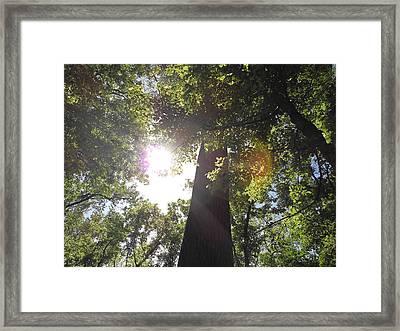 Sleeping Under The Trees Framed Print by Craig Keller