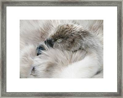 Sleepy Cygnet Framed Print by Julie L Hoddinott