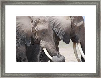 Sleepy Elephants Framed Print by Alan Clifford
