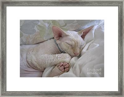 Sleepy Kitty Framed Print by Glennis Siverson