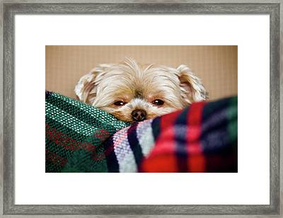 Sleepy Puppy In Blanket Framed Print by Gregory Ferguson