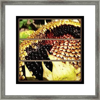 Sliced Sunflower Framed Print