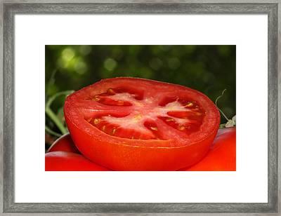 Sliced Tomato In The Garden Framed Print