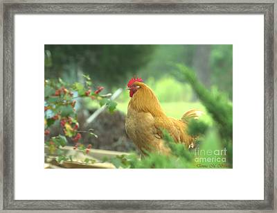 Slick 2 Framed Print