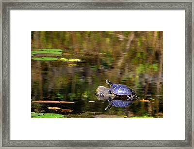 Slider In The Sun Framed Print by Mary Zeman