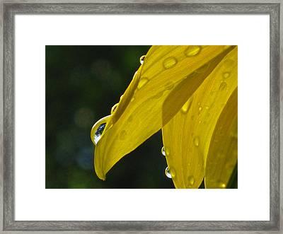 Slip Sliding Away Framed Print