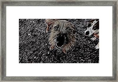 Small But Able To Make An Almighty Noise Framed Print by Douglas Barnard