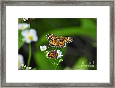 Small Butterfly Framed Print