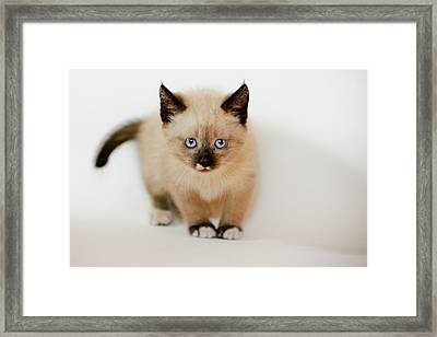 Small Cat Framed Print by A. Aleksandravicius