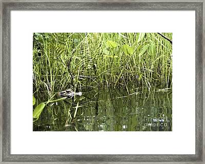 Small Cayman Framed Print by Darcy Michaelchuk