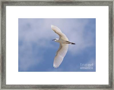 Framed Print featuring the photograph Small Egret Flying Over The House by John  Kolenberg