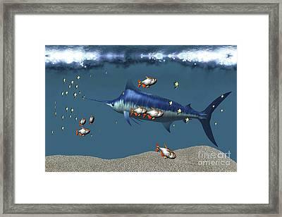 Small Fish Accompany A Blue Marlin Framed Print