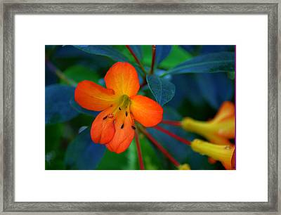 Framed Print featuring the photograph Small Orange Flower by Tikvah's Hope