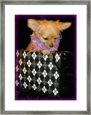 Small Package I Framed Print by Sheri McLeroy