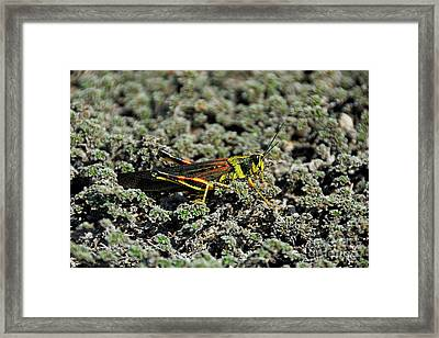 Small Painted Locust Framed Print by Sami Sarkis