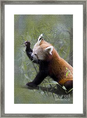 Small Panda Framed Print by Heiko Koehrer-Wagner