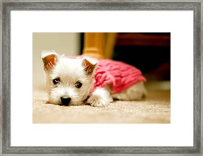 Small Puppy Sleeping On Mat Framed Print by James DiBianco Jr