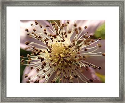 Small Seeds Framed Print