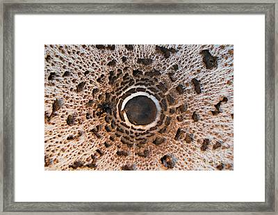 Small Universe Framed Print by Elena Mussi