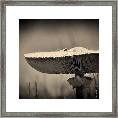 ...small Visitors Framed Print