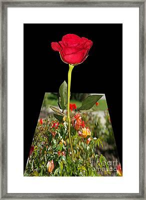 Smell Me Framed Print by Mariola Bitner
