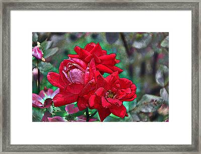Smell The Roses Framed Print by Paul Mashburn