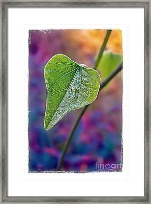 Smilax Framed Print by Judi Bagwell