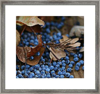Smile Framed Print by Carrie OBrien Sibley