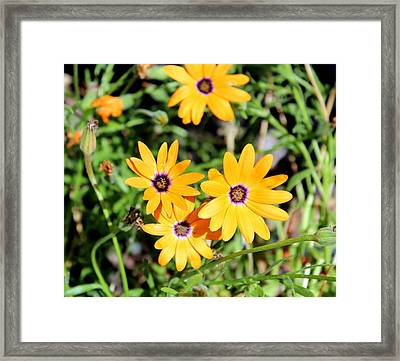 Smiling At The Sun Framed Print