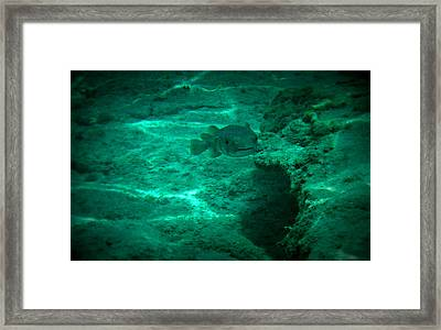 Smiling Fish Framed Print by Kimberly Perry