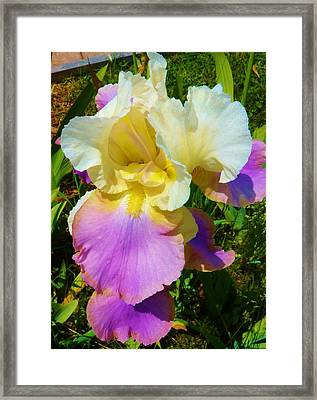 Smiling Pretty Framed Print by Jeanette Oberholtzer