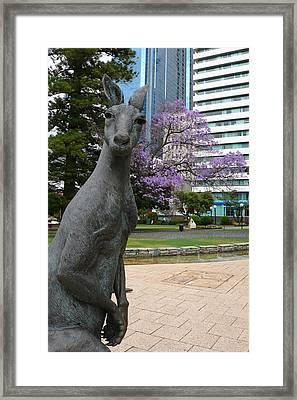 Smith Kangaroo Framed Print by Gregory Smith