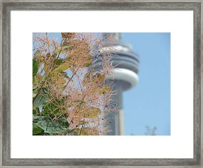 Smoke Bush With Cn Tower Framed Print by Alfred Ng