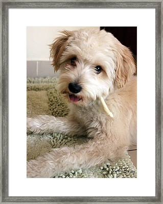 Smoking Lhasa Apso Bingo 3 Framed Print by Zoh Beny