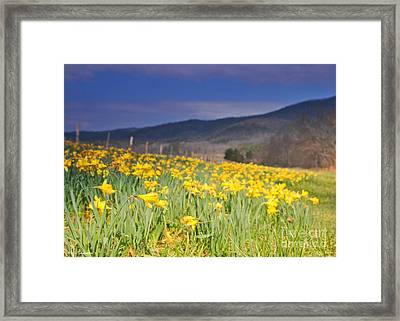 Smoky Mountain National Park Daffodil Spring Framed Print by Nature Scapes Fine Art