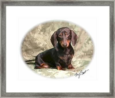 Smooth Dachshund Doxie Pup Framed Print by Maxine Bochnia
