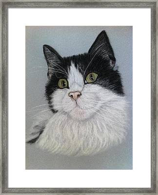 Smudge  A Pastel Portrait Framed Print by Hillary Rose