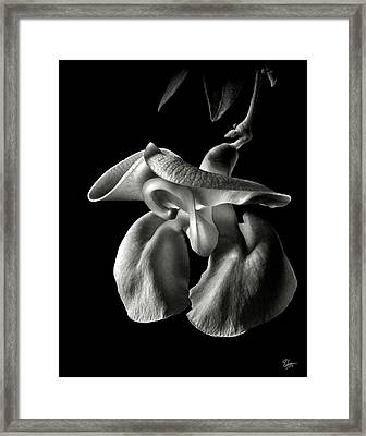 Snail Flower In Black And White Framed Print