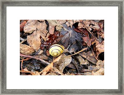 Snail In The Leaves Framed Print by Carolyn Postelwait
