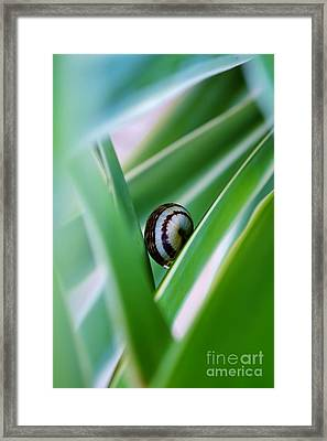 Framed Print featuring the photograph Snail On Yuca Leaf by Werner Lehmann