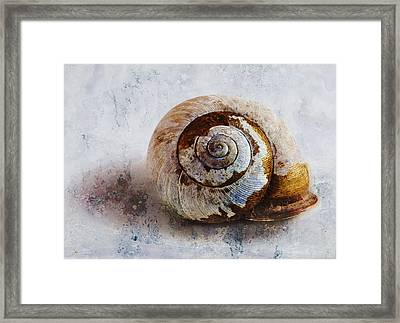 Snail Shell Framed Print by Ron Jones