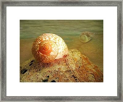 Snailing Around Framed Print