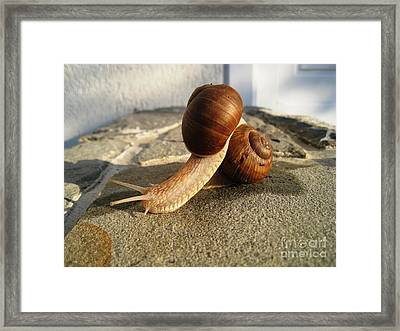 Snails 18 Framed Print by AmaS Art