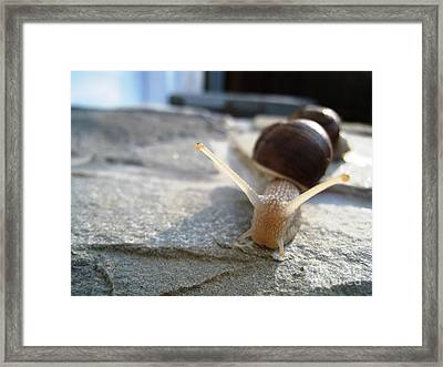 Snails 20 Framed Print by AmaS Art