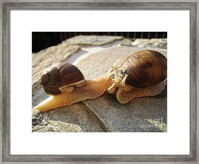 Snails 5 Framed Print by AmaS Art
