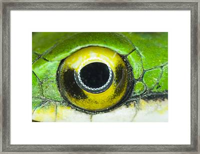 Framed Print featuring the photograph Snake Eye by John Burns