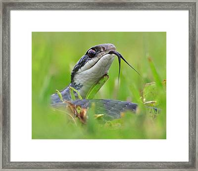 Snake In The Grass Framed Print by Jessie Dickson