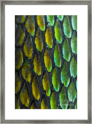 Framed Print featuring the photograph Snake Skin by John Burns