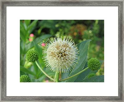 Framed Print featuring the photograph Snakeroot Rider by Mark Robbins