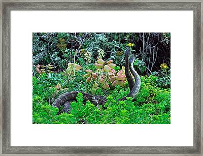 Snakes In The Grass Framed Print by Richard Leon